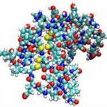 Эпидермальный фактор роста BT (EGF)