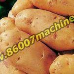 Оборудование для мойки и сушки картофеля