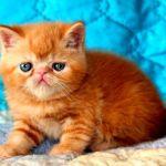 Очаровательная малышка красный мрамор