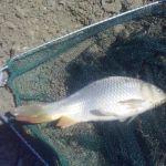 Рыбалка и отдых в крыму, ловля карпа, карася, белого амура